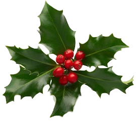 Holiday holly